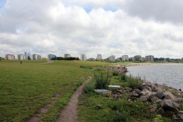An image of the study site in Malmo, with green on the left and shallow water on the right