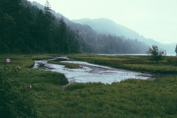 A view of a stream and wetland in a misty landscape of pines and mountains