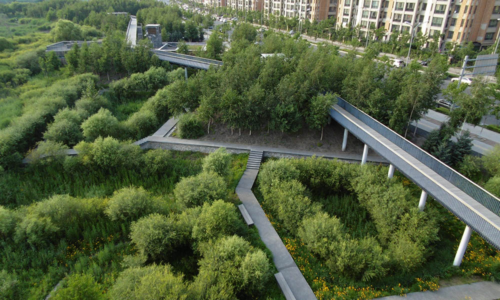 A network of bridges crosses an urban park