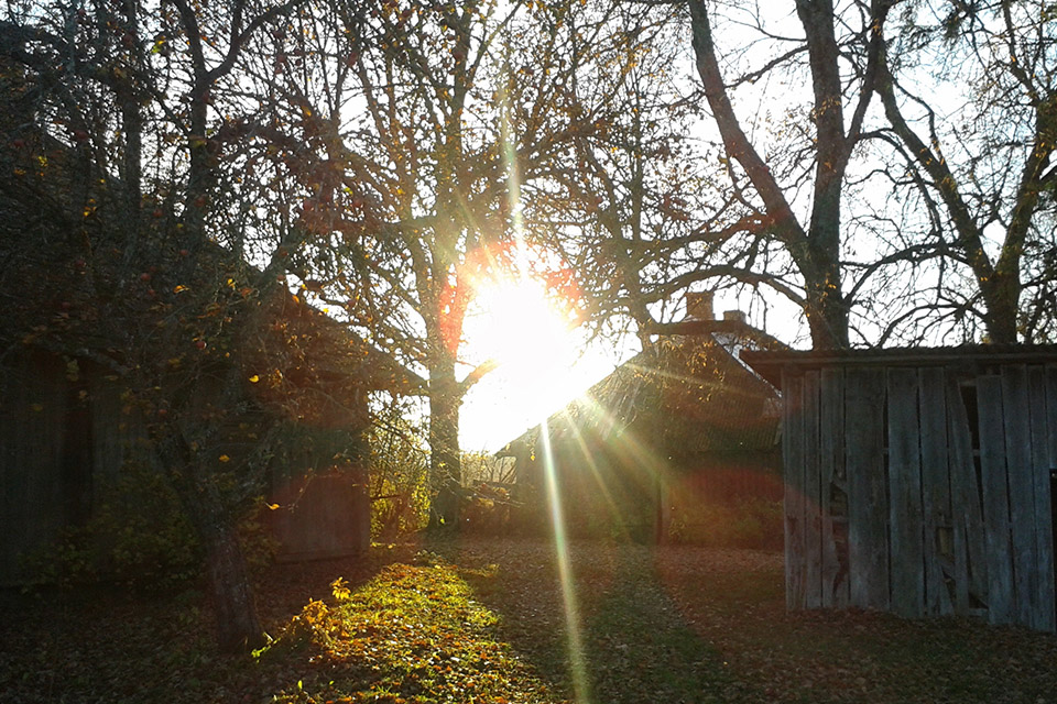 the sun shines through trees and a farm house in autumn