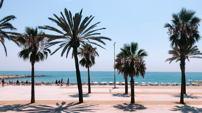 Palm trees and a concrete walk way on Barcelona's seafront
